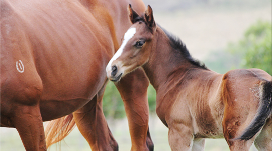 Specializing in foaling down